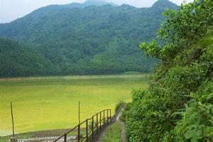 Hồ Gò Miếu bị ô nhiễm nặng nề