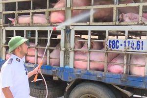 5 ổ dịch tả lợn Châu Phi bùng phát tại Đồng Nai chỉ trong 10 ngày