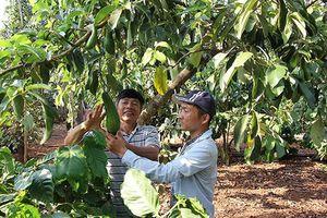 Xúc tiến đưa quả bơ Việt Nam vào thị trường Hoa Kỳ