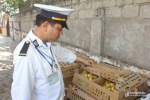Bắt giữ hơn 3.000 con gia cầm mới nở không giấy kiểm dịch