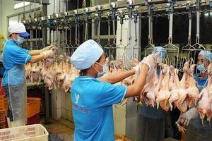 Công ty cổ phần chăn nuôi CP sẽ tham gia xuất khẩu thịt gia cầm