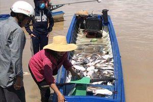 Đồng Nai: Sau cơn mưa lớn kéo dài, cá bè La Ngà lại chết trắng