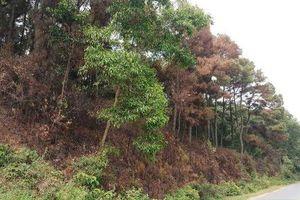 Thanh Hóa: Tiền hỗ trợ bảo vệ rừng bị 'xén' không lý do