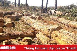 Phạt đến 200 triệu đồng với hành vi phá rừng trái pháp luật