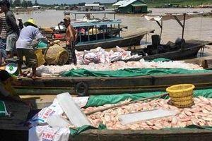 Nông dân rơi nước mắt nhìn cá nuôi chết trắng sông La Ngà