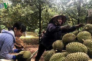 Nông nghiệp Tây Nguyên: Cần khích lệ tinh thần, văn hóa doanh nhân