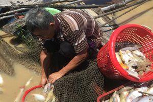Hàng trăm tấn cá lồng bè lại chết trắng sông ở Đồng Nai