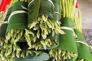 Măng tây - cây trồng nhiều triển vọng tại Quảng Ngãi
