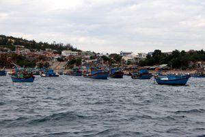 TP HCM hỗ trợ tiền bảo hiểm cho tàu cá và ngư dân