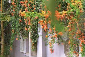 Tam hợp khi trồng cây trong nhà phố