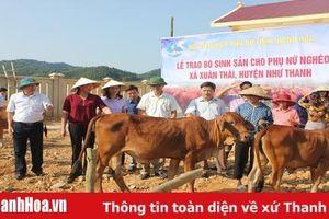 Ra mắt Tổ hợp tác chăn nuôi bò sinh sản