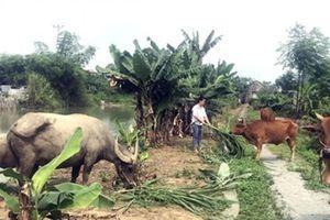 Kết quả bước đầu nâng mức cho vay tối đa hộ nghèo ở Ninh Bình