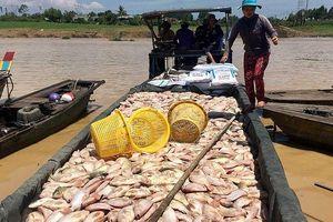 Thiệt hại quá nhiều khi cá sông La Ngà chết