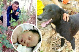 Chú chó 3 chân thành anh hùng khi cứu bé sơ sinh bị mẹ teen chôn