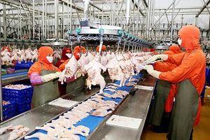 Ngành chăn nuôi bị nước ngoài 'nuốt chửng'?