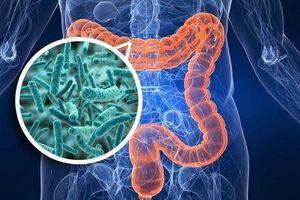 Vi khuẩn đường ruột và sức khỏe con người