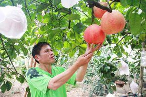 Hà Nội có 22 giống cây trồng đặc sản, quý hiếm