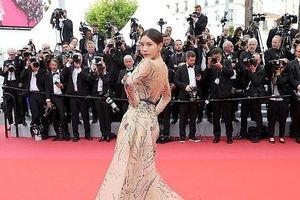 Liên hoan phim Cannes và câu chuyện về 'những cây tầm gửi'