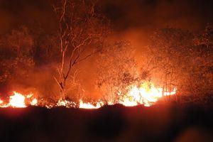 15 ha rừng phòng hộ ven biển Quảng Bình bị cháy rụi