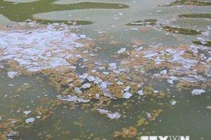 Thái Nguyên: Nước hồ Vai Miếu nổi váng, đặc quánh, bốc mùi hôi tanh