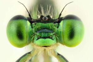 Những bức ảnh lạ thường về các loài côn trùng khi chụp cận cảnh (P2)