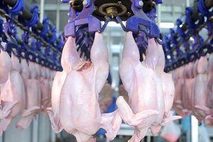 Dây chuyền sơ chế gà công nghiệp hiện đại ở nước ngoài