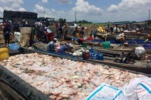 Người dân khóc ròng vì cá bè chết trên sông La Ngà lên gần 1.000 tấn