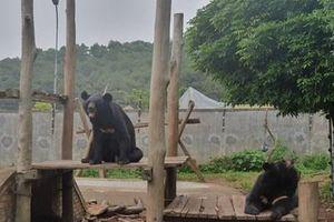 Công tác đấu tranh phòng, chống tội phạm buôn bán động vật hoang dã còn gặp nhiều khó khăn
