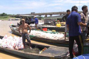 Cá chết trên sông La Ngà tăng lên gần 1.000 tấn