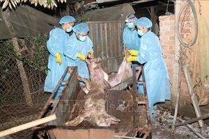 Đà Nẵng họp khẩn ngăn chặn dịch tả lợn châu Phi lây lan
