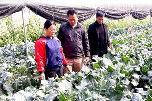 Tuyên Quang: Hai chàng hotboy rủ nhau về quê 'nghịch đất' trồng rau '5 không'