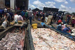 Đồng Nai: Dân khóc ròng cá lồng bè lại chết trắng trên sông La Ngà lên đến gần 1000 tấn