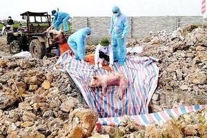 Khẩn trương xác minh thông tin báo chí nêu về trục lợi từ dịch tả lợn châu Phi tại xã Bình Lãng