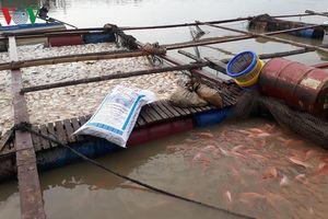 1.000 tấn cá chết ở La Ngà, Đồng Nai chưa xác định được nguyên nhân