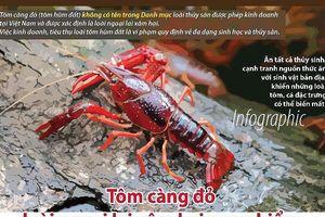 Tôm càng đỏ từ Trung Quốc đào hang sâu 2m hại môi sinh ra sao?