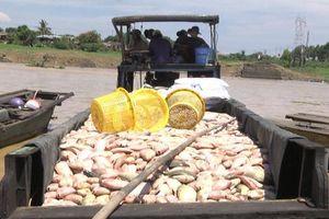 Điều tra nguyên nhân cá bè chết gần 1.000 tấn trên sông La Ngà