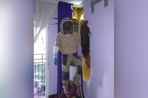 Tá hỏa phát hiện âm thanh kỳ lạ từ phòng ngủ là của… 80.000 con ong