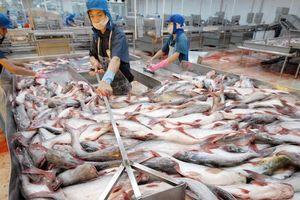 Tín hiệu vui từ việc xuất khẩu cá tra sang Chile