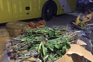 Bắt giữ xe khách chở đầy hàng cấm đi qua Quảng Bình