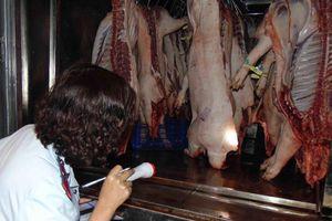 Thịt heo bệnh 'trốn' trong chợ Bình Điền vào 'mùa dịch tả'