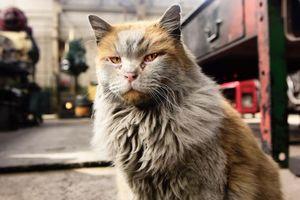 Từ mèo hoang trở thành gương mặt đại diện hút khách tại ga xe lửa Mỹ