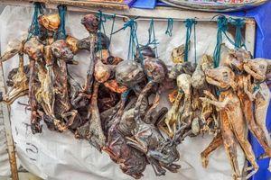 Những bào thai động vật đáng sợ trong chợ phù thủy ở Bolivia