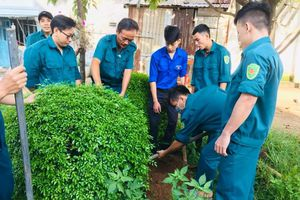 Sáng kiến giúp dân làm đẹp phố phường của các bạn trẻ TP.HCM