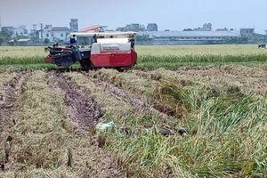 Điều tra nguyên nhân vụ phát hiện thi thể nam giới khi gặt lúa
