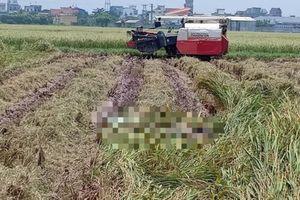 Đi gặt lúa, tá hỏa phát hiện thi thể đang phân hủy mạnh dưới ruộng