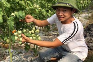 Gặp Giám đốc HTX Nông nghiệp xuất sắc ở Việt Đoàn