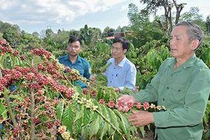 Quảng Ngãi hỗ trợ gần 8 tỷ đồng trồng rừng nguyên liệu gỗ lớn