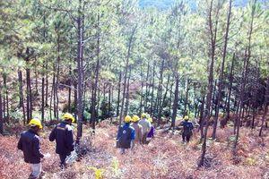 Nâng tỷ lệ che phủ rừng Tây Nguyên lên 49,2% vào năm 2030