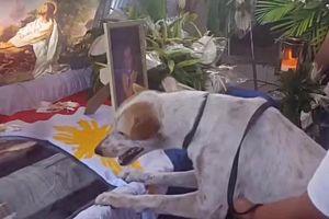 Chó khóc nấc, nức nở bên quan tài vị giáo sư đáng kính
