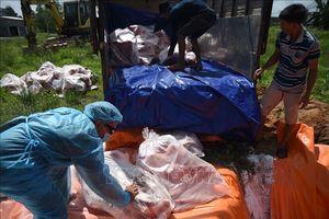 Đồng Nai phát động tổng vệ sinh tiêu độc khử trùng phòng, chống dịch tả lợn châu Phi